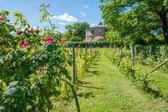 Rosendals garden in Stockholm Stock Photo