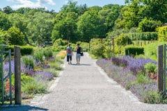 Rosendals trädgård i Stockholm arkivfoton