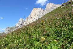 The Rosengarten Group, Dolomites. Field of flowers from the bottom of the Rosengarten Group, Dolomites Royalty Free Stock Photography