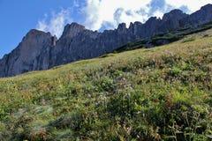 The Rosengarten Group, Dolomites. Field of flowers from the bottom of the Rosengarten Group, Dolomites Stock Photography
