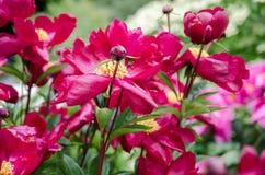 Rosengarten nach Regen in Mainau-Insel lizenzfreie stockbilder