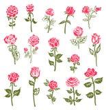 Rosengestaltungselemente Stockbilder