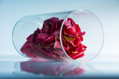 Rosepeddals setzte sich in ein Glas stockbilder