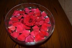 Rosepetals vermelho na bacia enchida água imagens de stock