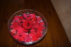 Rosepetals vermelho na bacia enchida água foto de stock royalty free