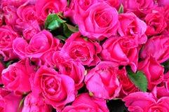 Rosepink. Fresh rosepink background wallpaper Stock Images