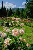 Roseraie Images libres de droits