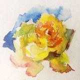 Roseraie colorée de fleur de fond d'art d'aquarelle Photos libres de droits