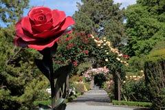 Roseraie dans les jardins botaniques photographie stock libre de droits