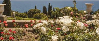 Roseraie des roses blanches et rouges sur la terrasse du sud du palais de Vorontsov crimea image libre de droits