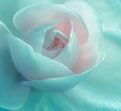 Roseraie rose, effet de filtre de vintage Photos libres de droits