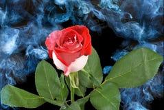 Rosesï反对烟背景的¿ ½ 库存图片