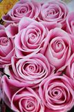 This is a colorful roses. The roses,This is a colorful roses stock photography