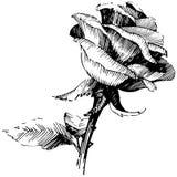 8 roses à main levée de trame de format noir du retrait ENV d'ajout là tracent le blanc de version de vecteur Fleur botanique flo Photo stock