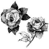 8 roses à main levée de trame de format noir du retrait ENV d'ajout là tracent le blanc de version de vecteur Fleur botanique flo Image stock