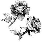 8 roses à main levée de trame de format noir du retrait ENV d'ajout là tracent le blanc de version de vecteur Fleur botanique flo Images stock