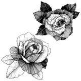 8 roses à main levée de trame de format noir du retrait ENV d'ajout là tracent le blanc de version de vecteur Fleur botanique flo Photo libre de droits