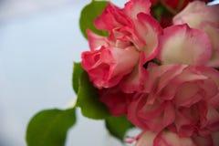 Roses 3ème Images libres de droits