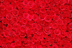 Roses_05 Stock Photo