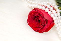 Roses. Beautiful red rose and pearl necklace , lay on white to fur Stock Photo
