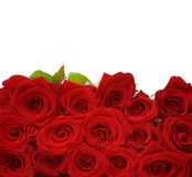 Roses. Beautiful Red Roses Border.Isolated on white royalty free stock photo