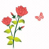Roses. Stems of Roses with butterfly and pattern background Stock Photography