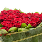 Roses. Heart of roses, red roses Royalty Free Stock Photo