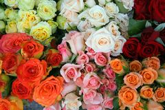 Roses. Photographed in a small flower shop in Vienna Royalty Free Stock Photos