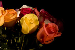 Roses. Differente colored roses with warm lighting in studio Royalty Free Stock Photo