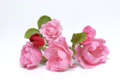 Roses. Pink roses on white background Royalty Free Stock Images
