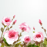 Roses. Romantic background with pink roses. EPS 10 Stock Photos