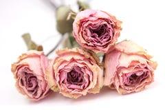 Free Roses Stock Image - 19759951