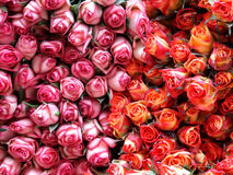 Roses. In two different colors on the flower market royalty free stock image