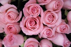 Roses. Pink roses bouquet  on white Stock Images