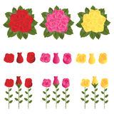 Roses. Set of roses and bouquet of roses in three colors:red, pink and yellow.Isolated on white background. EPS file available Stock Images