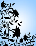 Roses. Black rose silhouette on blue background Stock Image