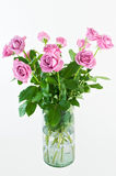 Roses. Picture of roses in a vase Stock Images