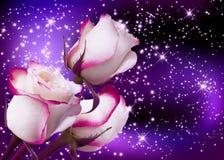 Roses illustration libre de droits