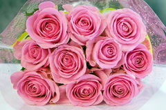 Roses Royalty Free Stock Photography
