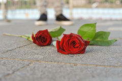 Roses. Red roses on the sidewalk Royalty Free Stock Images