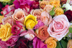 Roses. Background image of red, pink and yellow roses royalty free stock photo