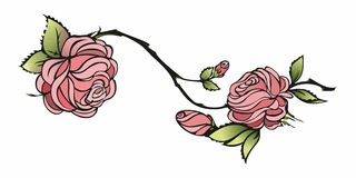 Roses. Color  illustration sweet red roses studded with dew clipping path Royalty Free Stock Photo