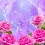 Roses. Pink roses and shine stars Royalty Free Stock Images