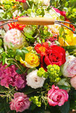 Roses. Blooming flowers in a basket Stock Images