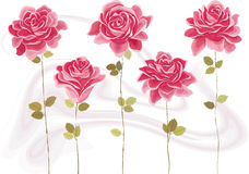 Roses. Collection of beautiful pink roses. Each rose is grouped. Vector illustration Royalty Free Stock Images