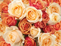Roses Photos stock