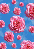 Roses. Rain of pink roses against a blue summer sky Royalty Free Stock Photos