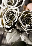 Roses. Rose (Rosa), a kind of flower which belongs to the rose-like family, includes over 200 species (according to some researchers up to a few thousands) stock photography