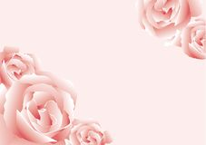 Roses. Abstract vector illustration of some pink roses Royalty Free Stock Photography