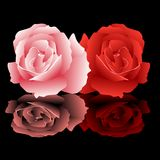 Roses. Abstract vector illustration of pink and red roses Stock Photography
